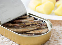 Sprats Royalty Free Stock Photos