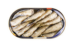 Sprats in a tin Royalty Free Stock Image
