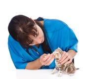 Sprawdzać oczy kot w weterynaryjnej klinice Odizolowywający na bielu Zdjęcia Royalty Free