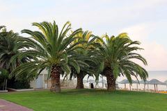 Sprawling palm trees on the beach Hotels Royalty Free Stock Images