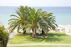 Sprawling palm trees on the beach Hotels Stock Photos