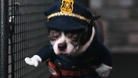 Sprawności fizycznej motywaci śmieszny dowcip Mały pies ubierający jako policjant iść na karuzeli Chłodno mądrze zwierzę domowe M zbiory wideo