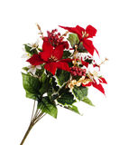 Spray of Christmas flowers royalty free stock images
