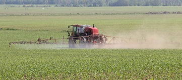 Spray Corn Field Stock Photo