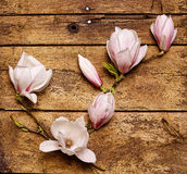 Spray of dainty fresh pink magnolias Stock Photos