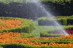 Spray flowers Stock Image