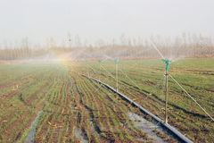 Spray irrigation Stock Photo