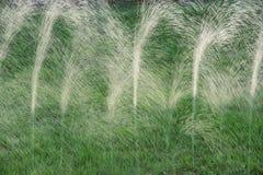 Spray irrigation Stock Photo
