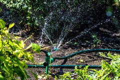 Spray for irrigation works in the garden stock photography