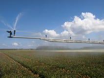 Spray machine over a tulip field royalty free stock photos