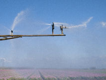 Spray machine over a tulip field. With a colorful rainbow royalty free stock photos