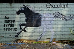 Excellent Horse. Spray painting of a horse in a small square full of graffiti stock photo