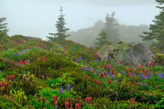 Spray Park, Washington State. Blossoming flowers on a foggy summer day at Spray Park in Mt. Rainier National Park in Washington State Stock Image
