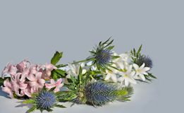 Flowers hyacinths and eryngium spray Stock Images