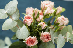 Spray roses. Bouquet of beautiful pink spray roses on dark background Stock Photo