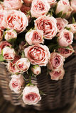 Spray roses. Bouquet of pink spray roses in basket Royalty Free Stock Photo