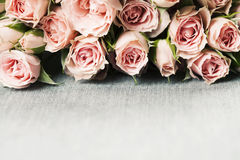 Spray roses. Bunch of pink spray roses on grey with copyspace Royalty Free Stock Image