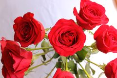 Spray of roses Stock Photography