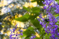 Spray von purpurroten Blumen mit grünen Blättern stockbilder