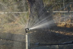 Spray Watering System Royalty Free Stock Photos