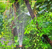 Sprayed water from sprinkler Royalty Free Stock Images