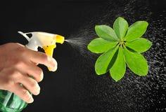Sprayer leaf Stock Images