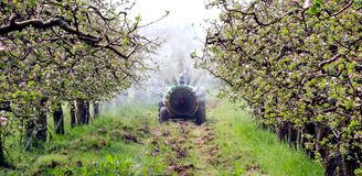 Spraying apple orchard in spring. Picture of a spraying apple orchard in macedonia Stock Images