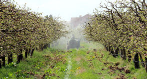 Spraying apple orchard in spring Stock Image