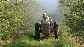 Spraying apple orchard in spring stock video