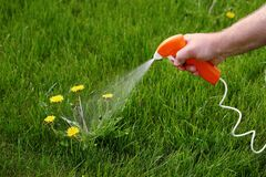 Free Spraying Chemical Weed Killer On A Dandelion. Stock Photography - 179791092