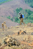 Spraying chemicals in the shifting cultivation. BAN NAMLOW, VIANGPHOUKHA, LUANGNAMTHA , LAO P.D.R - MAY 31 :Unidentified akha ethnic man is spraying chemicals in Stock Photography