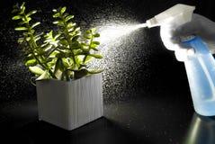 Spraying the Essence of Life Stock Image