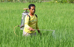 Spraying. Farmers spraying insecticides to eradicate pests in Boyolali, Central Java, Indonesia Royalty Free Stock Photo