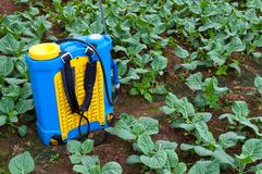 Spraying Fertilizer. Hand-pumped sprayer, Using pesticides on the garden. Spraying of vegetable plots royalty free stock images
