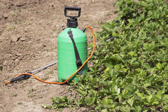 Free Spraying Fertilizer. Hand-pumped Sprayer. Using Pesticides On The Garden. Spraying Of Strawberry Bushes During Flowering Stock Photos - 92022633