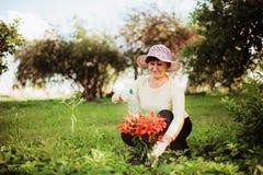 Spraying flowers. Royalty Free Stock Photos