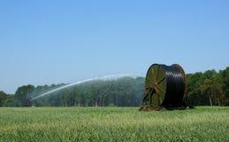 Spraying grain Royalty Free Stock Photo