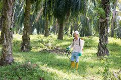 Spraying herbicides at oil palm estate. Palm oil worker is spraying herbicides to poisoning weeds in plantations royalty free stock photo