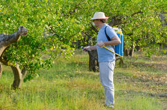 Spraying a lemon field Stock Image