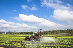 Spraying lettuce Royalty Free Stock Images
