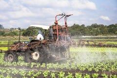 Spraying lettuce Stock Images
