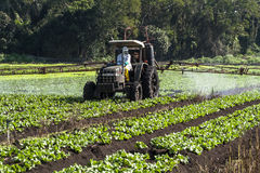 Spraying lettuce. MOGI DAS CRUZES, BRAZIL, JULY 01, 2009. Spraying lettuce crops field with tractor and sprayer Royalty Free Stock Photography