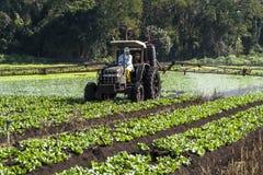 Spraying lettuce Royalty Free Stock Photography