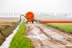Spraying machine on the tulip field. Large view on the spraying machine on the tulip field Stock Photo