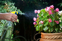Spraying mist on flowers Stock Photo