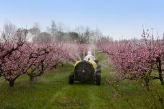 Spraying Of Peach Stock Images