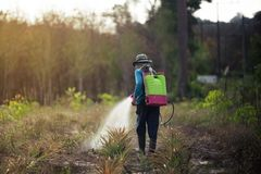 Spraying pesticide. In the garden stock photo