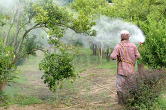 Spraying pesticide. Farmer spraying pesticide on orchard royalty free stock image