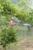 Spraying pesticide Royalty Free Stock Photo