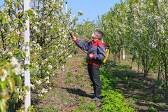 Spraying pesticide. Agricultural worker in a apple orchard spraying pesticide Royalty Free Stock Photography